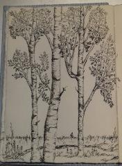 birch: pen & ink, Anna Citrino