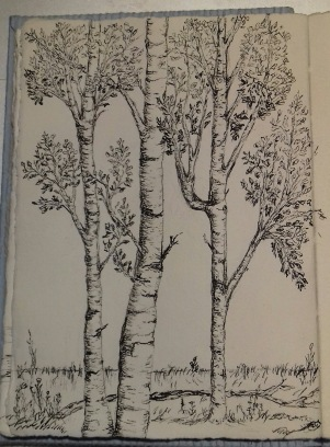 birch: pen & ink, Anna Citrino