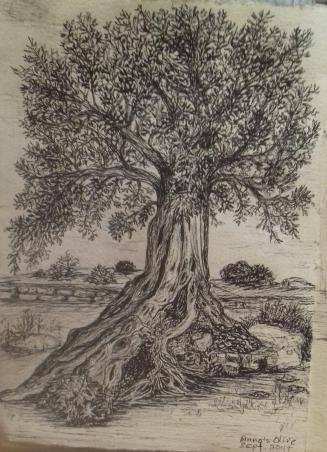 olive, Agrigento, Sicily, pen & ink, Anna Citrino