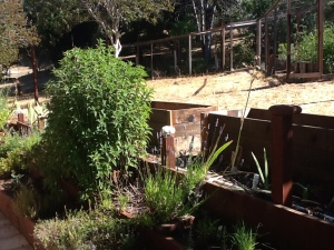 Gratitude Garden in its Beginning Stage