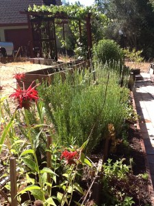Herb Bed at Gratitude Gardens