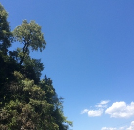 Musoorie Hillside