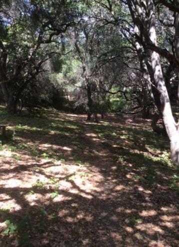 Path through woods