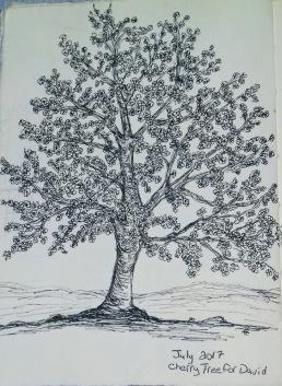 cherry, pen & ink, Anna Citrino
