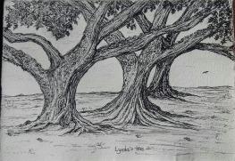 red oak, pen & ink: Anna Citrino