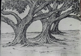 red oak, pen & ink: Anna Citrino