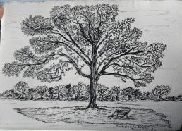 jacaranda, pen & ink, Anna Citrino