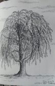 willow: pen & ink, Anna Citrino
