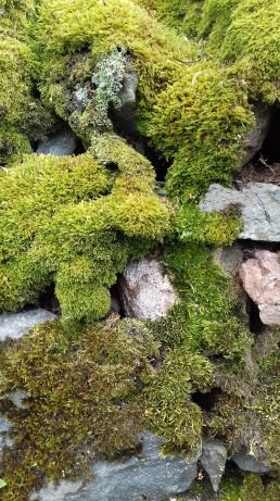 Lake District roadside moss, UK
