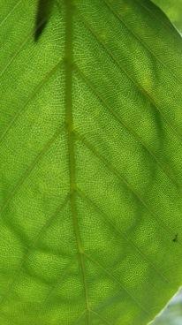 Leaf at river's edge, Lake District, UK