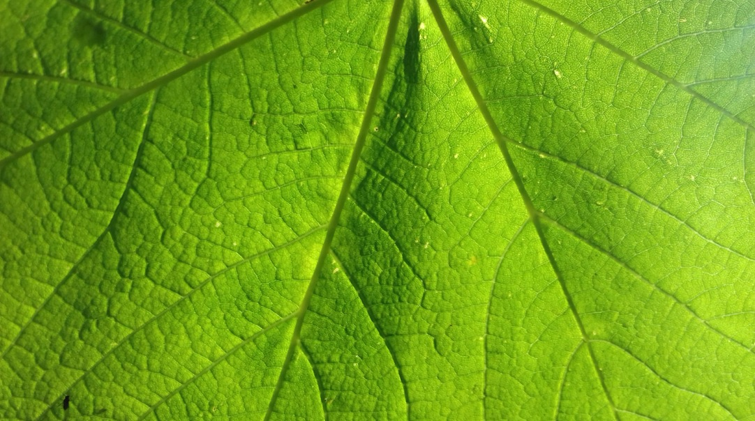 Leaf texture, Lake District riverside, UK