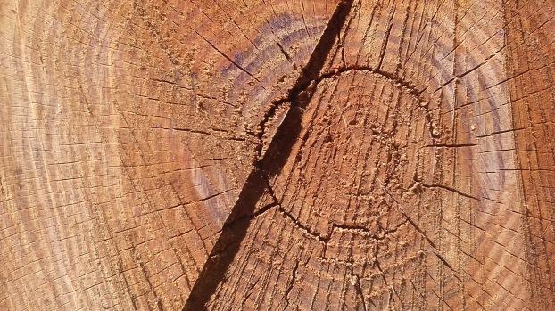 Cut log, Croatia