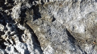 Rock texture, Dalmatian coast, Croatia