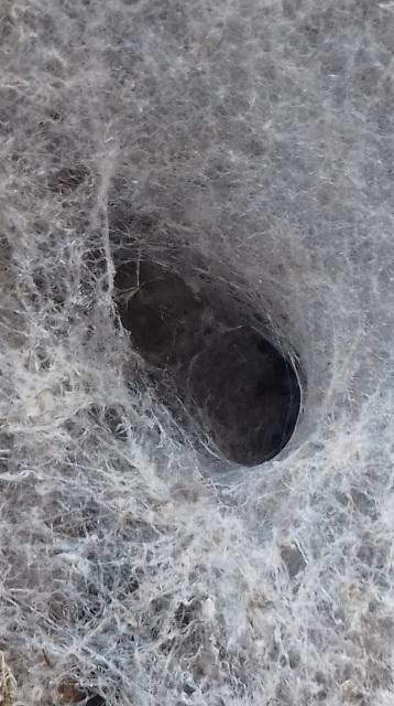 Spider's web, Neary's Lagoon, Santa Cruz, CA
