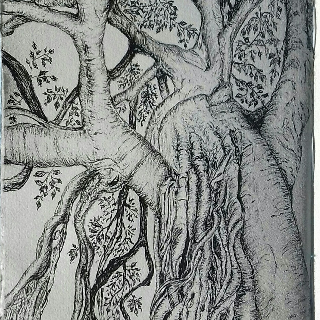 banyan tree, Monreale, Sicily, pen & ink, Anna Citrino