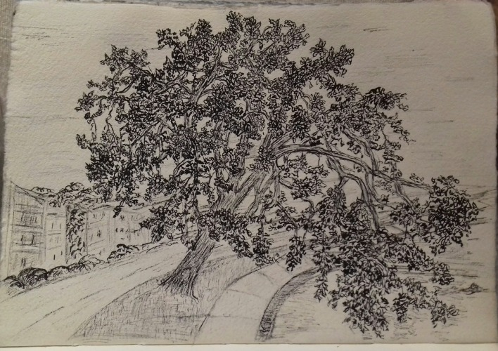 Gary Oak, pen & ink, 2017, Anna Citrino