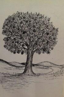 Orange tree, pen & ink, Anna Citrino