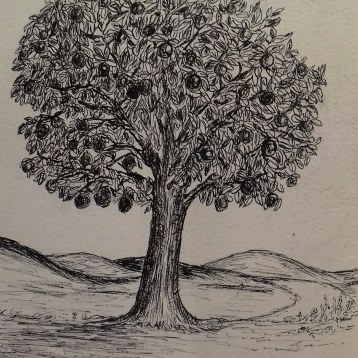 Orange tree, pen & ink, Anna Citrino
