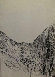 sapling rising from mother tree, Big Basin, CA, pen & ink, Anna Citrino