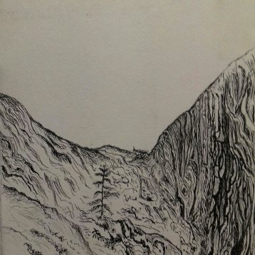 sapling rising from mother tree, Big Basin, CA, pen & ink, Anna Citrino