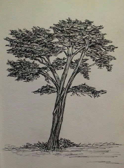 Cypress, Cayucos, California, pen & ink, Anna Citrino