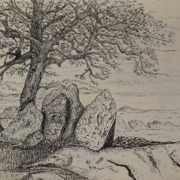 tree in California landscape, pen & ink, Anna Citrino