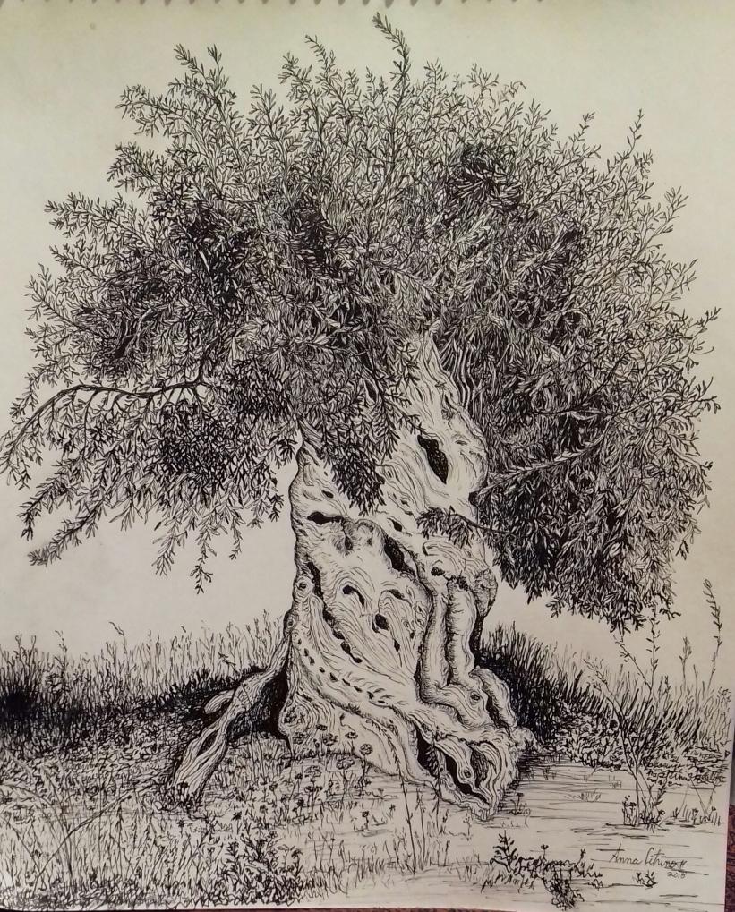 Sicilian Olive, pen & ink 9/2018